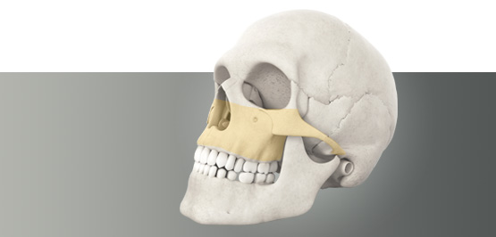 Skull - midface products