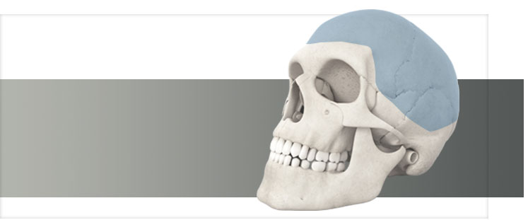 Skull - cranial products