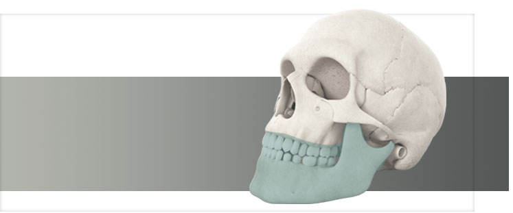 Skull - mandible products